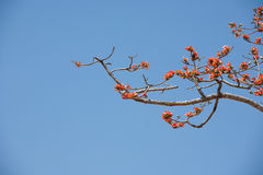 Цветок Silk хлопка Стоковые Фотографии RF