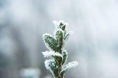 Цветок Snowy Стоковые Фотографии RF