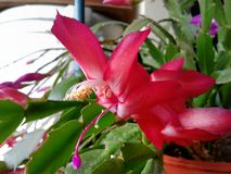 цветок spiky Стоковые Фото