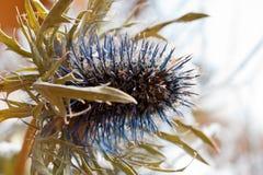 цветок spiny Стоковые Фотографии RF