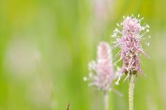 Цветок Trentino Стоковые Изображения RF