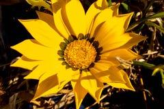 Цветок Unknow Стоковое Изображение RF