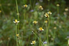 Цветок view1 Стоковые Фотографии RF