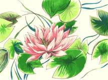 Цветок Waterlily в озере Стоковая Фотография