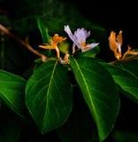 Цветок, Wildflowers Wildflowers красивые, апельсин и цвет лаванды Стоковое Изображение RF