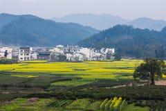 Цветок Wuyuan-Рапса Стоковое Фото