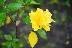 Цветок Yelloe Стоковые Изображения
