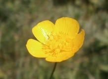 Цветок Yelow стоковые изображения rf