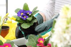 Растения весны картинки
