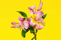 Цветочная композиция Стоковое Изображение RF