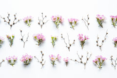 Цветочная композиция Стоковое Фото
