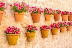 Цветочные горшки на стене Стоковое Изображение RF