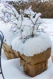 Цветочные горшки снега стоковая фотография rf