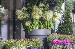 Цветочные горшки стоя внешний в улице стоковое изображение rf