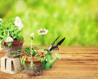 Цветочные горшки с цветками и садовничая утварями дальше Стоковое Фото