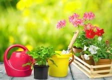 Цветочные горшки с цветками и садовничая утварями дальше Стоковые Фотографии RF