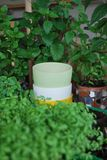 Цветочные горшки Стоковая Фотография RF