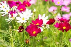 Цветочные сады Стоковое Изображение RF