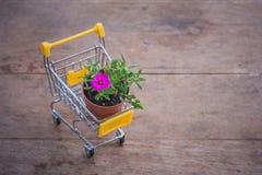 Цветочный горшок в желтом мини комплекте магазинной тележкаи или вагонетки супермаркета на деревянном поле в винтажном стиле Стоковые Изображения