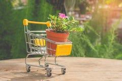 Цветочный горшок в желтых мини магазинной тележкае или вагонетке супермаркета установил на деревянный пол Стоковое Изображение RF