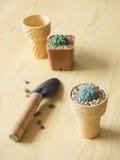 Цветочный горшок конуса мороженого Стоковые Изображения