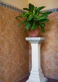 Цветочный горшок на колонке Стоковые Фотографии RF