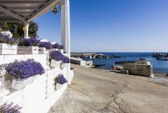 Цветочный горшок на порте Linosa старом стоковые изображения rf