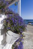 Цветочный горшок на порте Linosa старом стоковая фотография