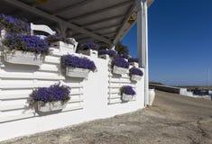 Цветочный горшок на порте Linosa старом стоковые фото