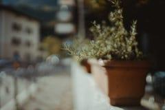 Цветочный горшок на стороне дороги Стоковые Изображения