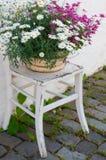 Цветочный горшок на стуле Стоковое Фото