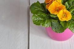 Цветочный горшок петуньи на таблице Стоковое Изображение RF