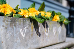 Цветочный горшок/поднос, с побеленными мелом сердцами на бортовом и близко сердце в фокусе Стоковая Фотография