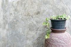 Цветочный горшок против стены цемента Стоковое Изображение RF