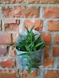 Цветочный горшок с зеленым растением на краснокоричневой предпосылке стены блока кирпича на саде задворк с освещением с предпосыл Стоковое фото RF