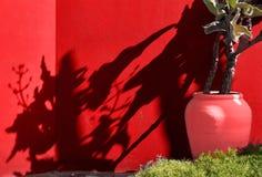Цветочный горшок с тропическим заводом на предпосылке яркой стены стоковая фотография
