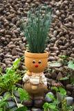 цветочный горшок Chipollino Стоковые Изображения
