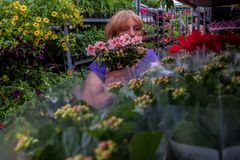 Цветочный магазин с заводами в баках с почвой стоковые фото