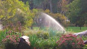 Цветочный сад в парке сток-видео