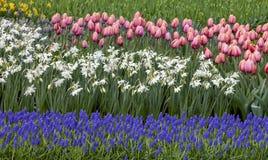 Цветочный сад - деталь стоковое фото rf