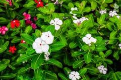Цветочный сад имеет много красочных цветки и красивых зеленых листьев стоковые фотографии rf