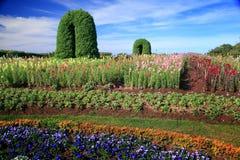 Цветочный сад стоковое изображение rf