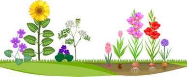 Цветочный сад с различными цветковыми растениями иллюстрация вектора