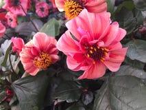 Цветочный сад времени весны стоковое изображение rf