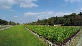 Цветочный сад в парке города видеоматериал