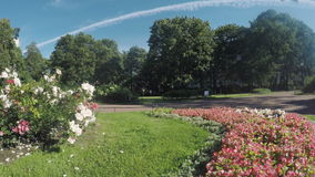 Цветочный сад в парке города сток-видео