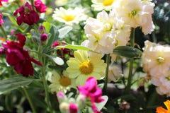 Цветочный сад лета Стоковые Фотографии RF