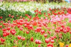 цветочный сад лилии Стоковое Изображение RF