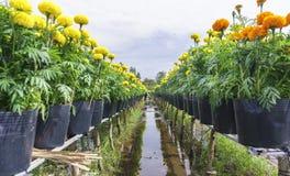 цветочный сад ноготк Стоковая Фотография RF