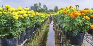 цветочный сад ноготк Стоковые Фотографии RF